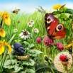 summer-meadow-1920x1408_3.jpg